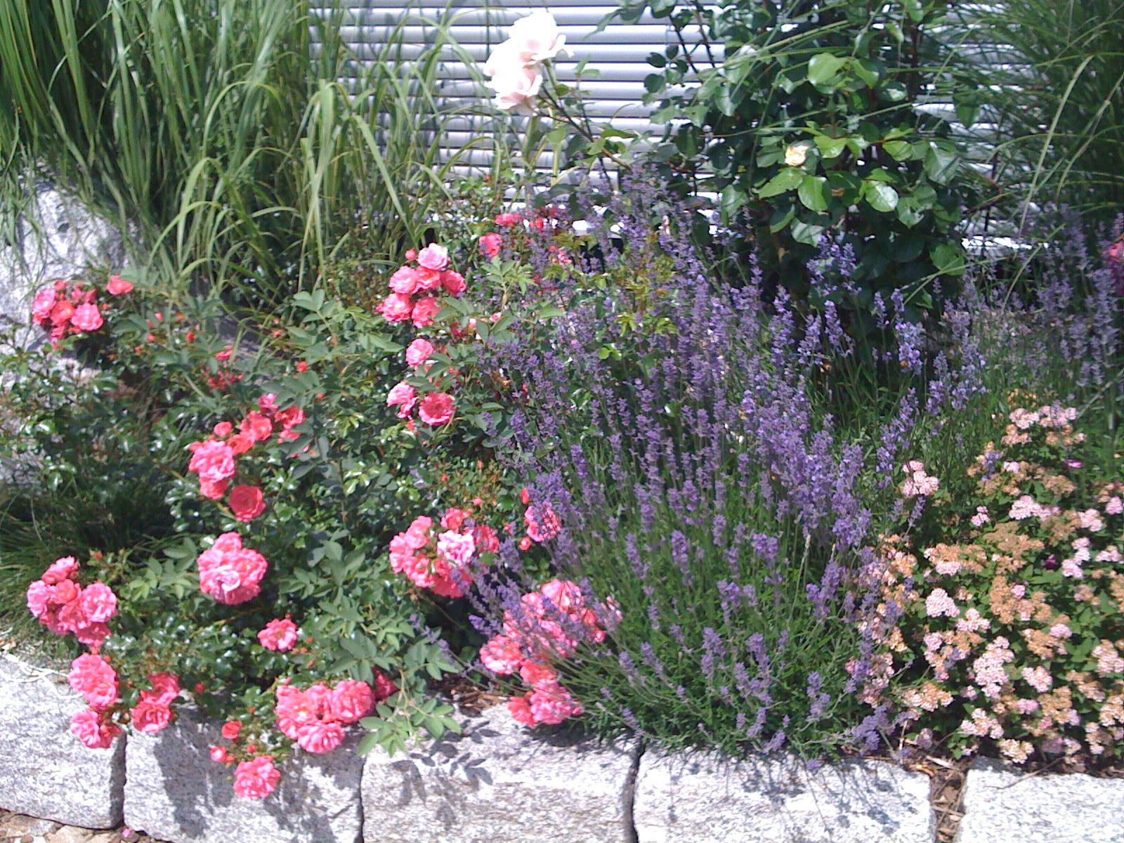 Bepflanzung 1 jpg